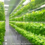 Vertical Farming: The Next Generation Farming