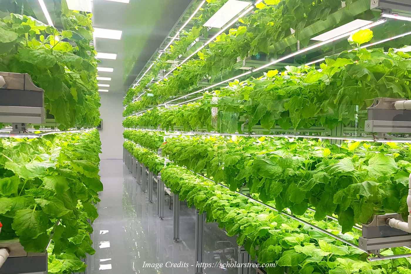Vertical Farming: The Next Generation Farming