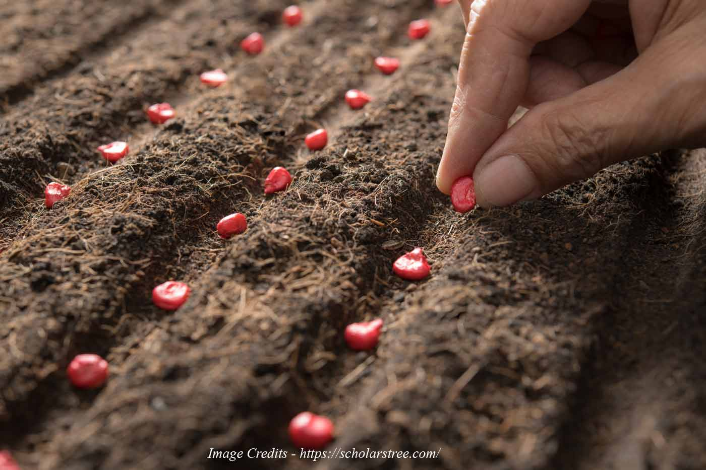 Importance of Seed Quality in Enhancing Crop Production in Agriculture