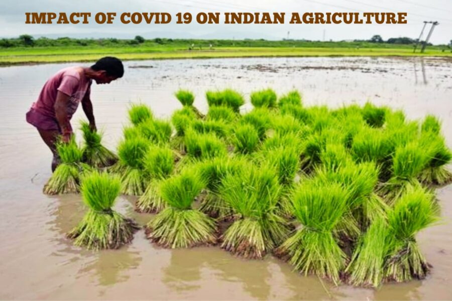 Impact of COVID 19 in Agriculture sector in India